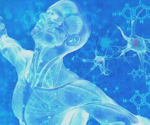 melhoria do sistema imunitário
